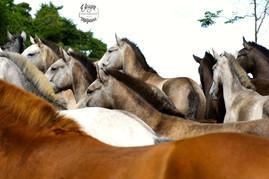 fotografia de cavalos
