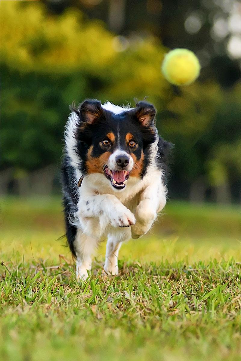foto cachorro em paruqe