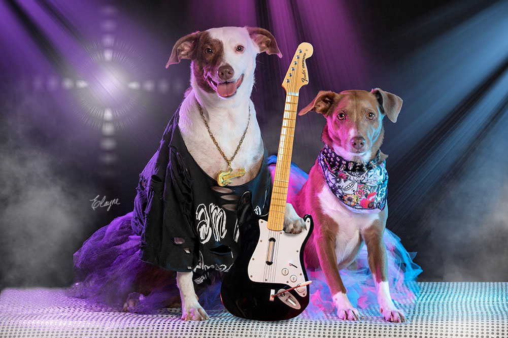 Cachorro rock star