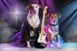 Cachorro rock star