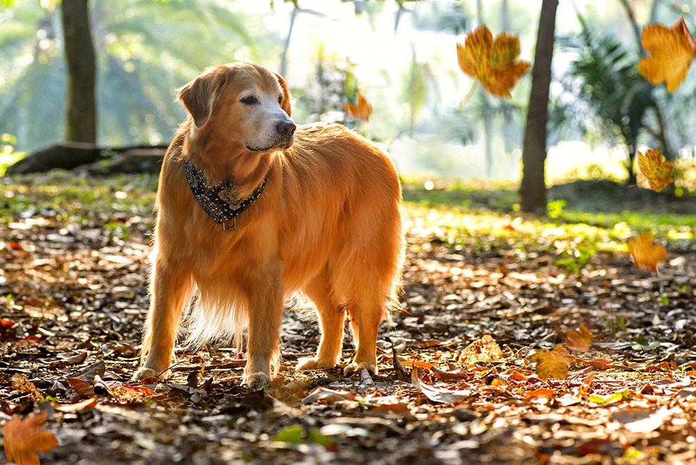 sessão de fotos de cachorro em sao paulo