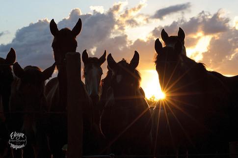 cavalos ao por do sol