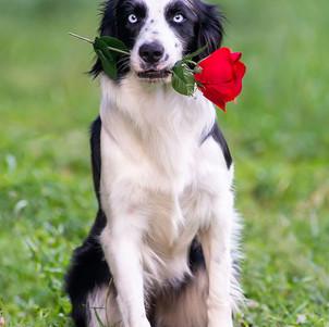foto de cachorro lindo