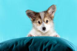 book de cachorro