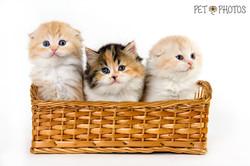 gatinhos filhotes em cestinho