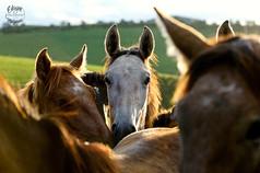 cavalos8.jpg