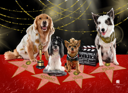 Hollywood Dogs