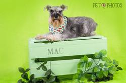foto de cachorro em estudio