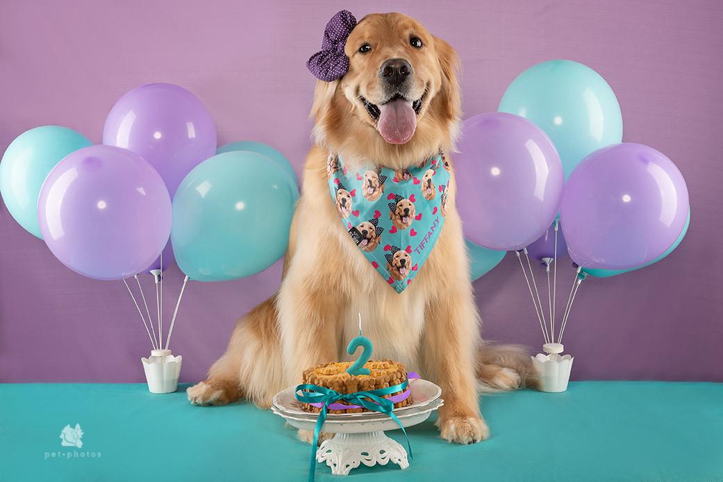 Aniversário Pet