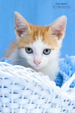foto de gato fofo