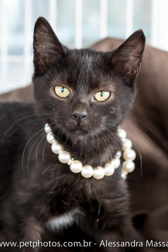 Gato para adoção - APAA