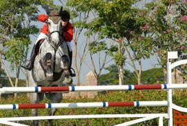 cavalo hipismo salto