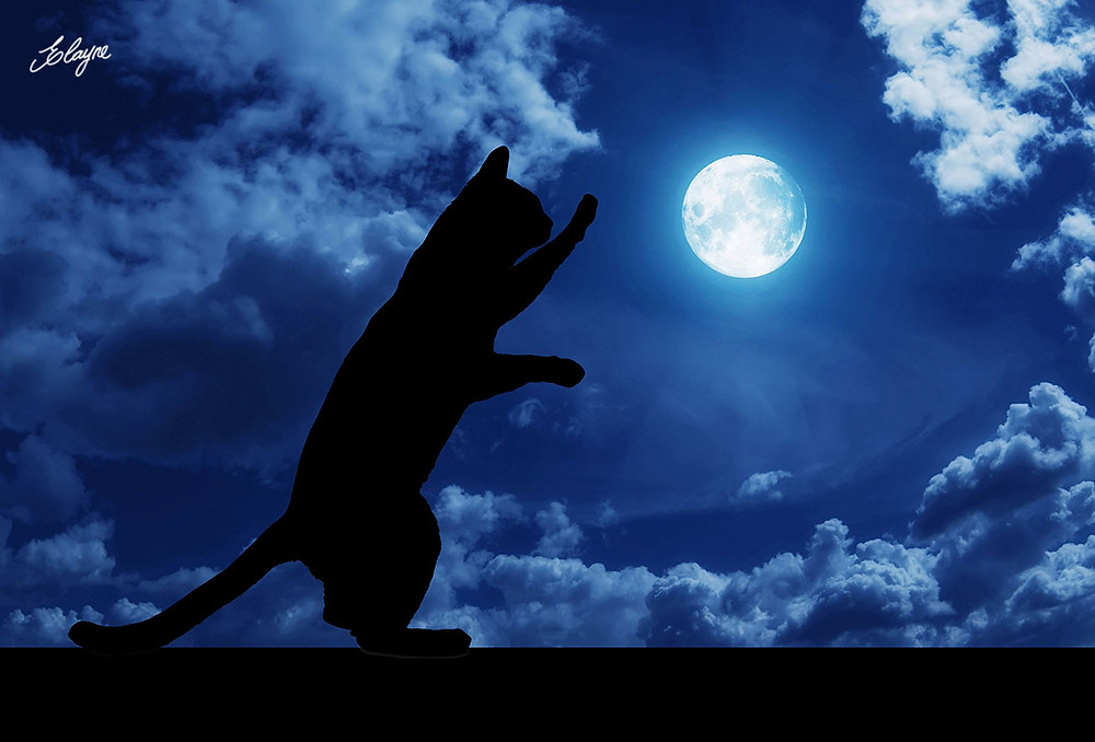 silhueta de gato com lua