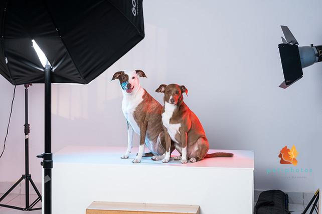 fotografo de cachorro