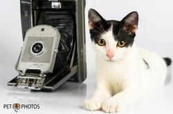 Gato camera fotografica antiga