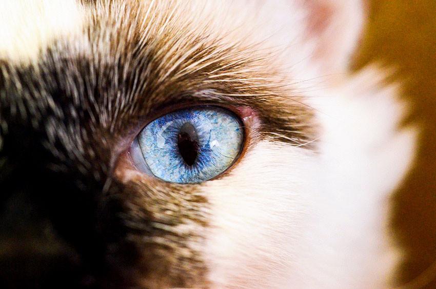 foto gato olho