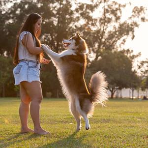 fotos de cachorro divertidas