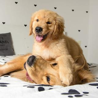 fotografo de cachorro na residencia