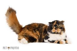 cat-3970