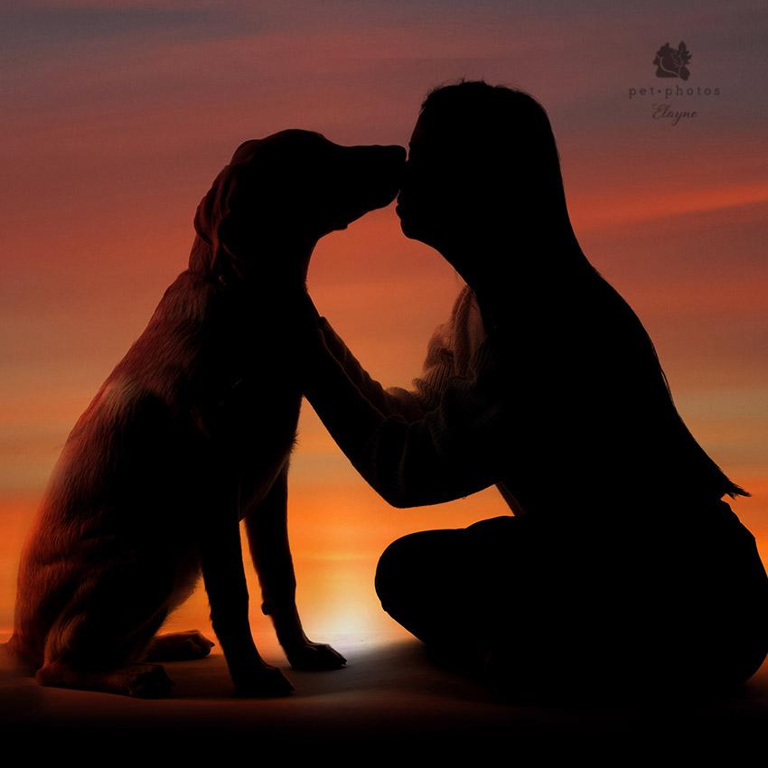 Foto de silhueta com cachorro