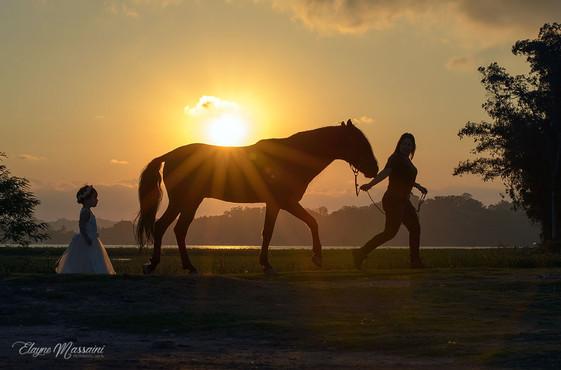 foto linda de cavalo