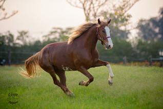 fotografia de cavalo em sao paulo