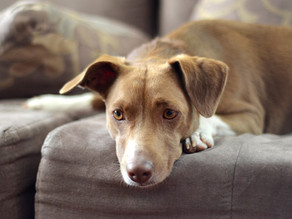 Um dia na vida de um cão. Project 52 theme - week 13 - DAY IN THE LIFE