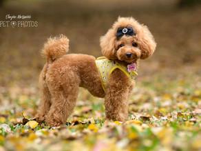 Como acontece um ensaio fotográfico de cachorro no parque
