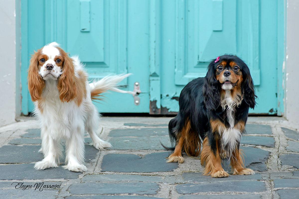 foto cachorro urbana