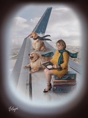 viajando com os pets