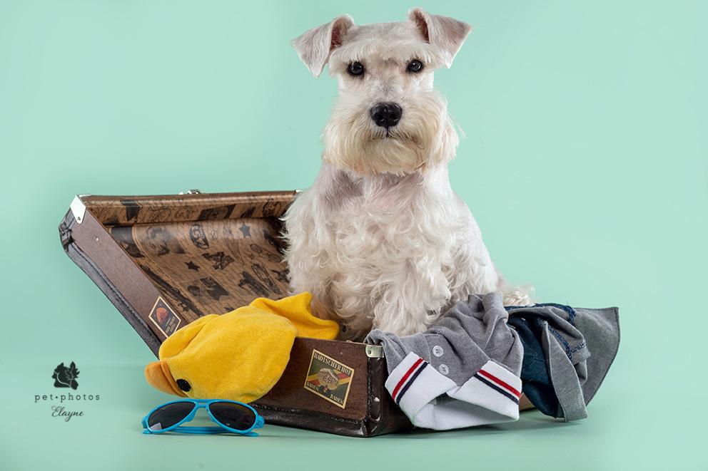 cachorro e viagem