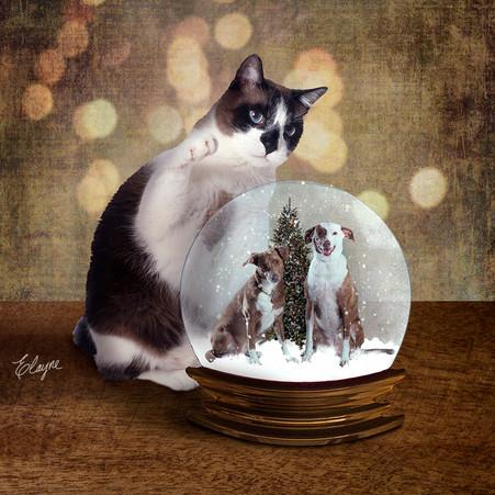 Desejo de Natal