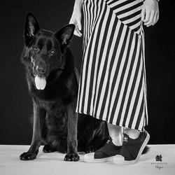 pastor alemão preto