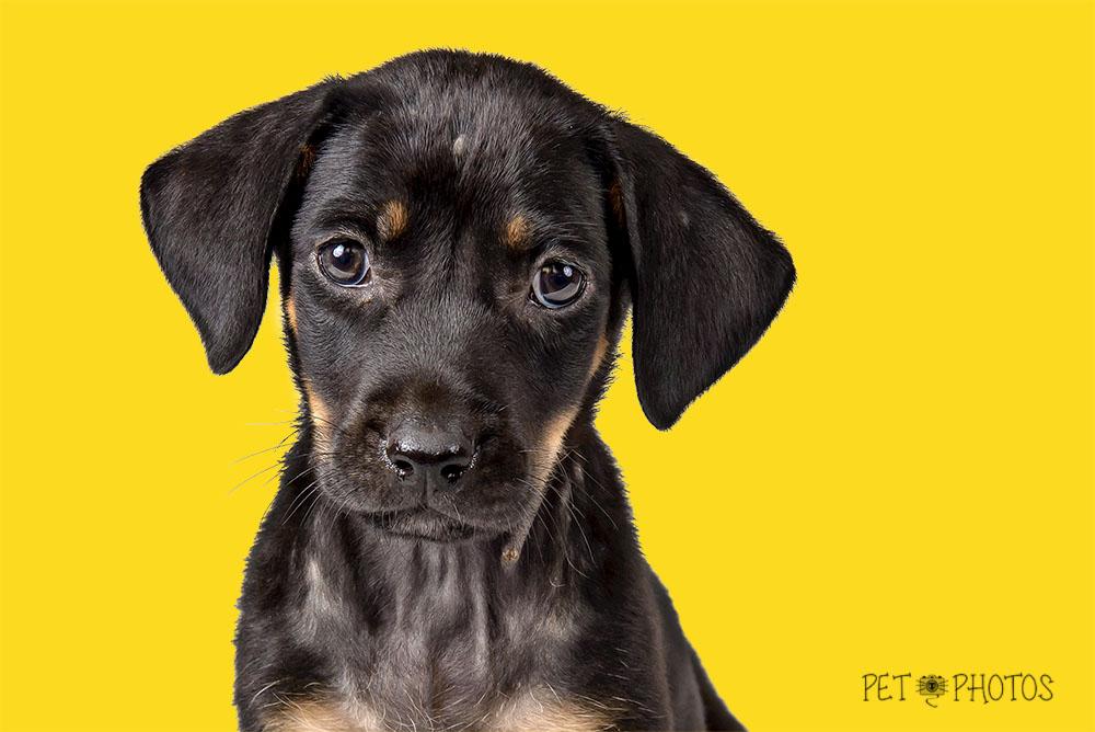 foto cachorro filhote