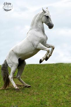 fotografia de cavalo