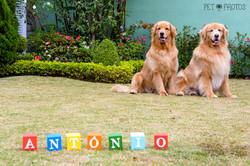 Cachorros a espera do irmao