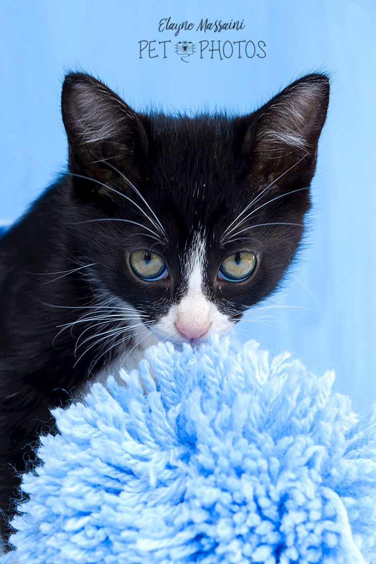 gatinho preto filhote
