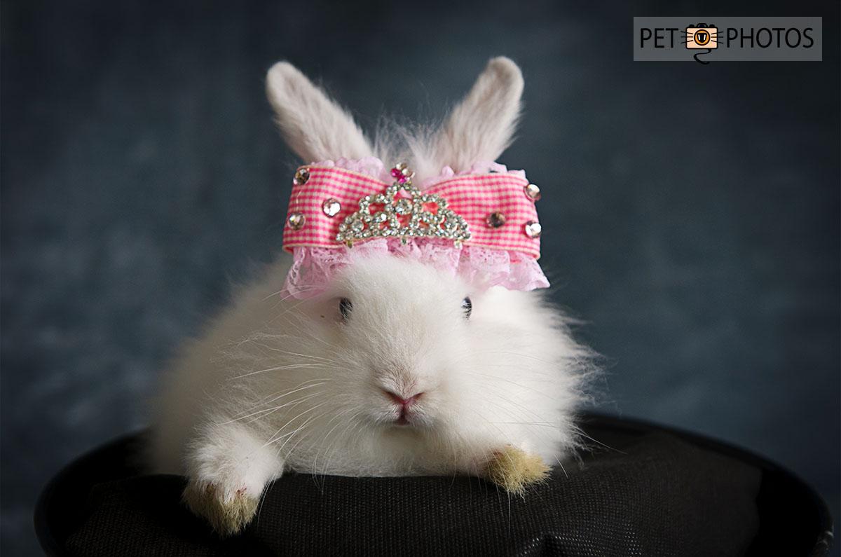 coelho com coroa