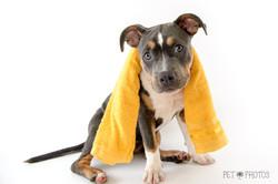 cachorro pet shop