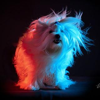 cachorro_estudio_lues.jpg