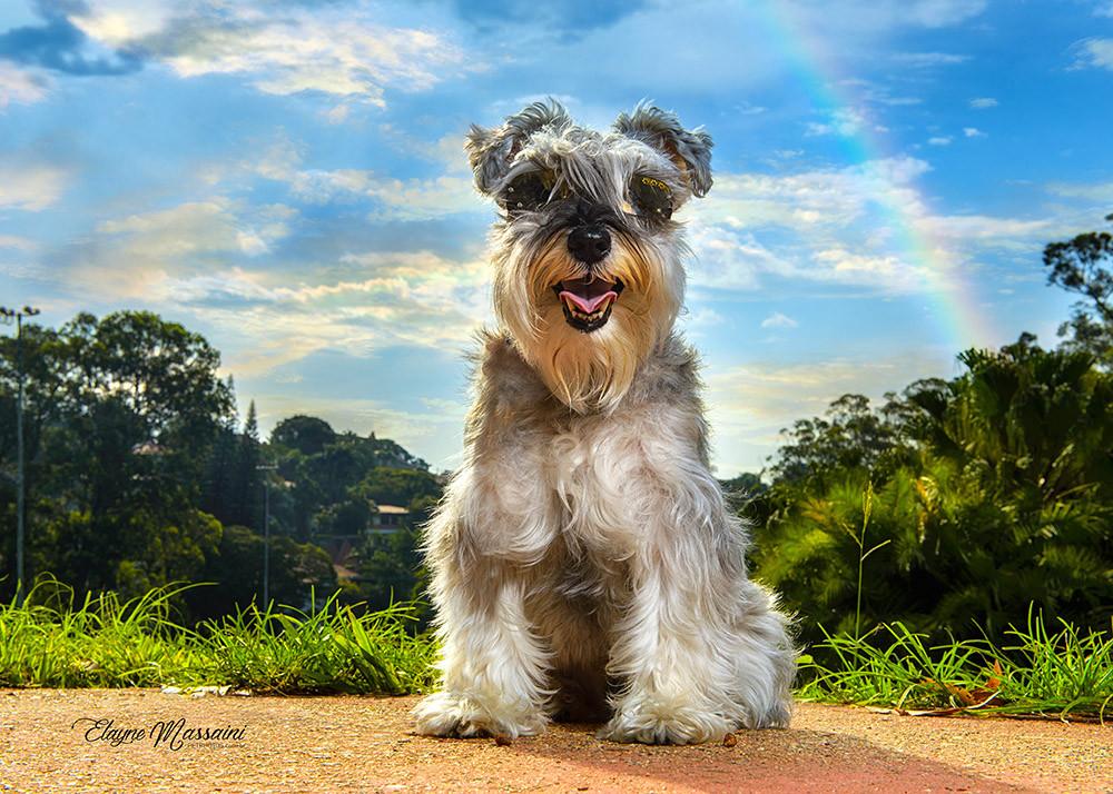 ensaio fotografico de cachorro em parque