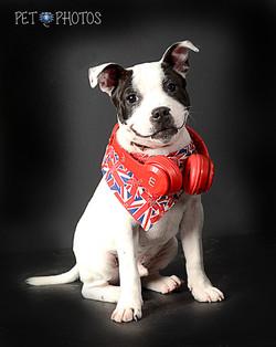 Stafordshire Terrier