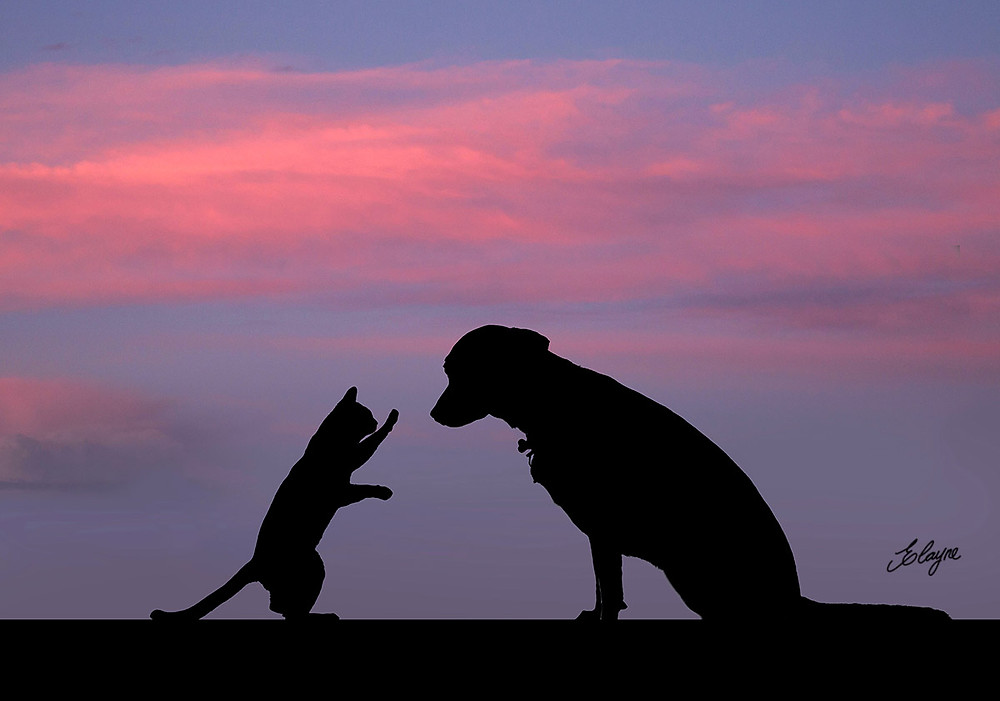 cachorro e gato silhueta