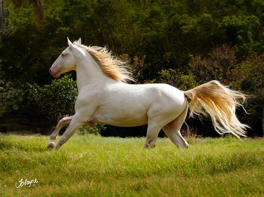 cavalo galopando