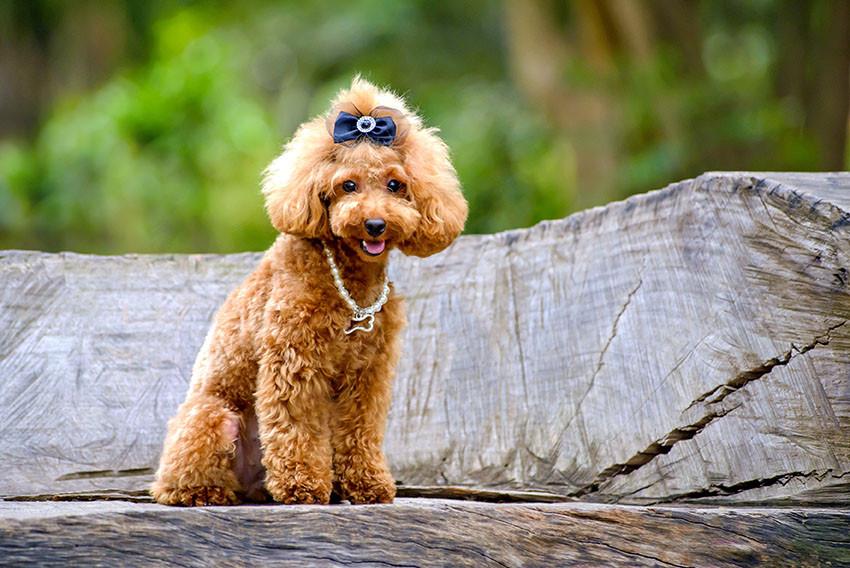 foto de cachorro no parque