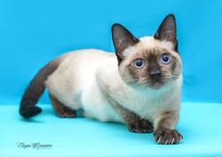 ensaio fotográfico de gato