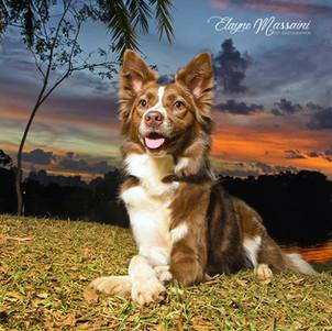 fotografia de cachorro em parque