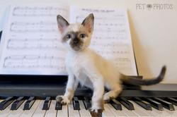Gato no Piano