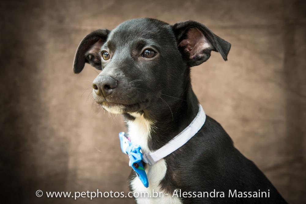 Cachorro para adoção - APAA