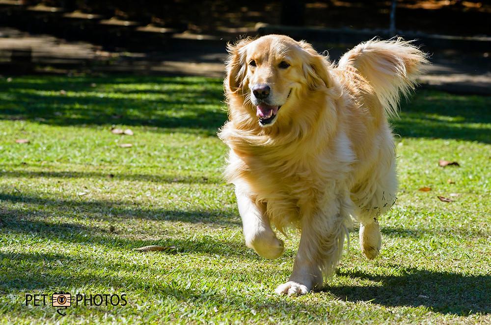 fotografia de cachorro correndo na grama